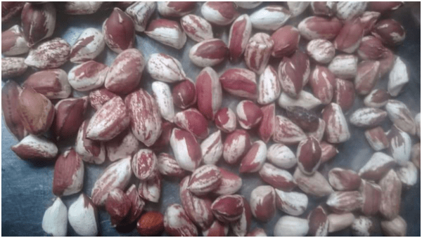 Groundnuts3